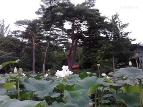 Im DongIl Hanok - AnChae