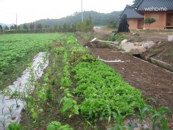 Jeollanam-do Boseong Green Tea floor - the main house