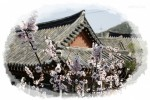 Danchon Chungbuk vow old house - the main house of cotton yarn
