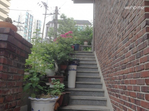 Stair with flower and Plant