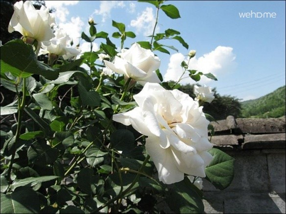[Mireuksan village] natural fragrance of the seasons, the palace of dreams _ lantern room flowers