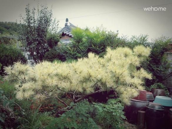 Jeonjucheon of streams, Jeonju Hanok 'swing pole' _ outbuildings Room 2