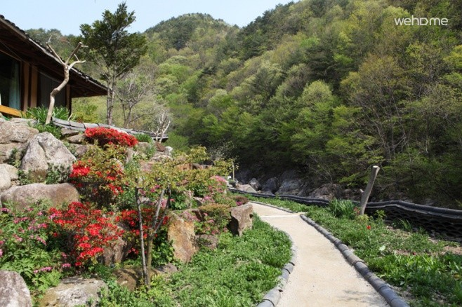 Wildflower Sanbang baramkkot
