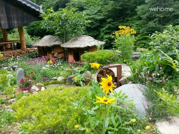 Wildflower Sanbang Daffodil (chimdaebang)