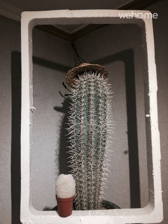 Frozen Cactus